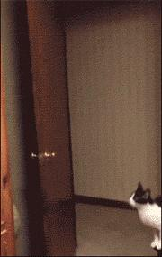 eating fast funny gif
